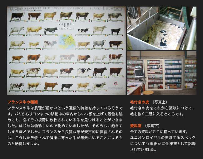 フランス牛の種類
